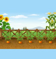 cartoon carrots growing in garden vector image vector image