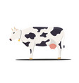 cow on white background vector image vector image