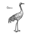 crane bird sketch gruidae animal with feather vector image vector image