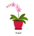 orchid plant in pot vector image vector image