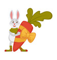 rabbit in scarf and socks holds huge carrot in vector image