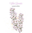 white lavender watercolor flowers isolated vector image vector image