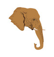 head elephant wild animal safari african vector image vector image
