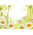 postcard with daisies vector image vector image
