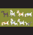 set goats vector image