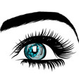 beautiful women eyes with make vector image vector image