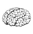 brain drawing vector image
