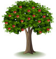 red apple on apple tree vector image