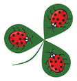 shamrock wiht three ladybugs three little red vector image