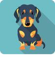 dog dachshund sitting icon flat design vector image vector image