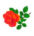 flower orange rose and leaves vintage vector image vector image