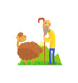 old shepherd herding sheep on green pasture vector image vector image