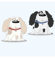Spaniel dog breed vector image vector image