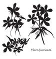Set of flowers phlox divaricata with leafs Black vector image