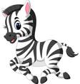 cute baby zebra vector image vector image