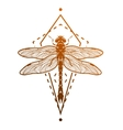 dragonfly and geometric elements vector image vector image