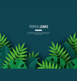 exotic jungle tropical palm leaves summer floral vector image