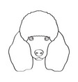 isolated poodle avatar vector image vector image