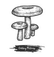 sketch oakbug or milkcap mushroom vector image vector image