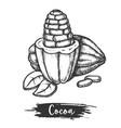 sliced cocoa bean or cacao fetus sketch plant vector image vector image