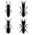 termites vector image vector image