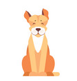 cute pit bull dog cartoon flat icon vector image