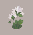 lotus flower icon water lily flower vector image