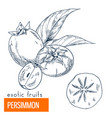 persimmon hand drawn vector image vector image