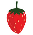 red strawberry on white background vector image vector image