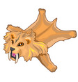 skin of saber-toothed tiger prehistoric animal vector image vector image