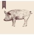 a pig Hand drawn Vintage vector image vector image