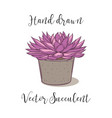 colorful succulent plant in a concrete flower pot vector image vector image