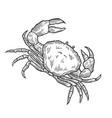crab hand drawn vector image vector image