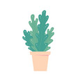houseplant in pot isolated flowerpot home plant vector image vector image