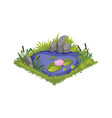 isometric cartoon water pond with wild reeds and vector image vector image