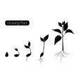 plant growth phases infographic evolution vector image