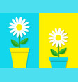 white daisy chamomile icon set flower pot cute vector image vector image