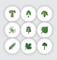 flat icon natural set of rosemary tree timber vector image vector image