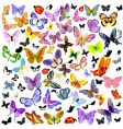 set of ladybug and butterfly vector image vector image