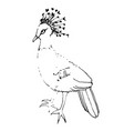 drawing crowned pigeon black handle of an vector image
