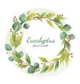 eucalyptus floral branches and leaves vector image vector image