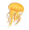 jellyfishes or medusae yellow underwater animal vector image vector image