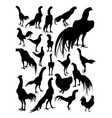 rooster and hen silhouette vector image