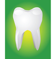 Tooth on green background vector image vector image