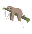 cute gray sloth sleeping resting on tree branch vector image vector image