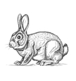 Hand drawn rabbit in engraving style vector image