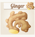 ginger cartoon icon vector image vector image