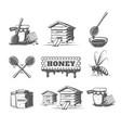 set elements honey vector image vector image