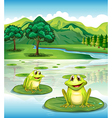 Two frogs above the waterlilies vector image vector image
