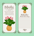 vintage label with potted flower kalanchoe vector image vector image